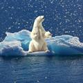 Polar-Eisbär